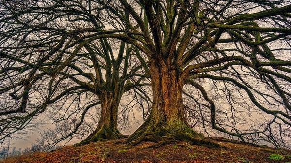 Jak wyciąć drzewo?